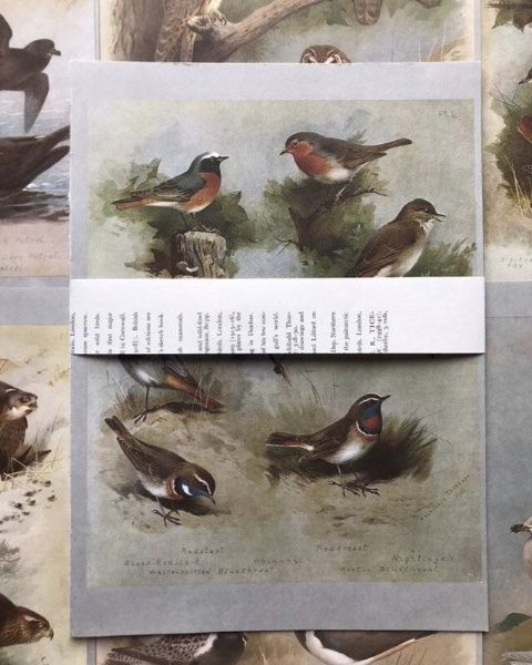 5 Thorburn's Birds Book Pages